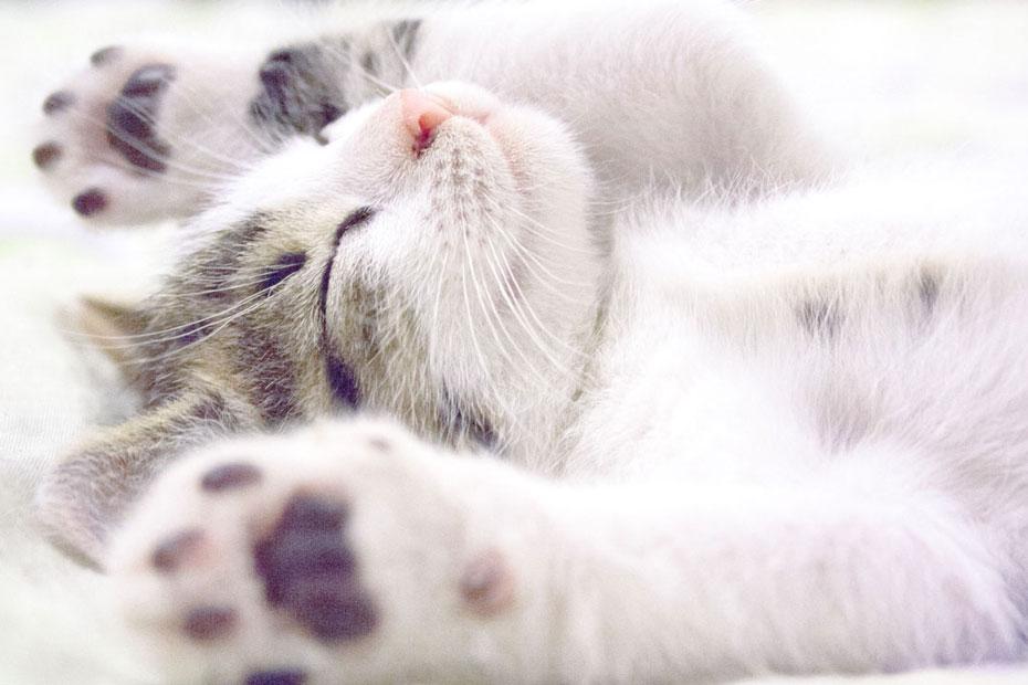 kitten paws in air