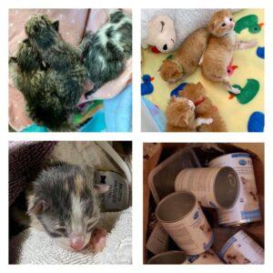 kitten litters