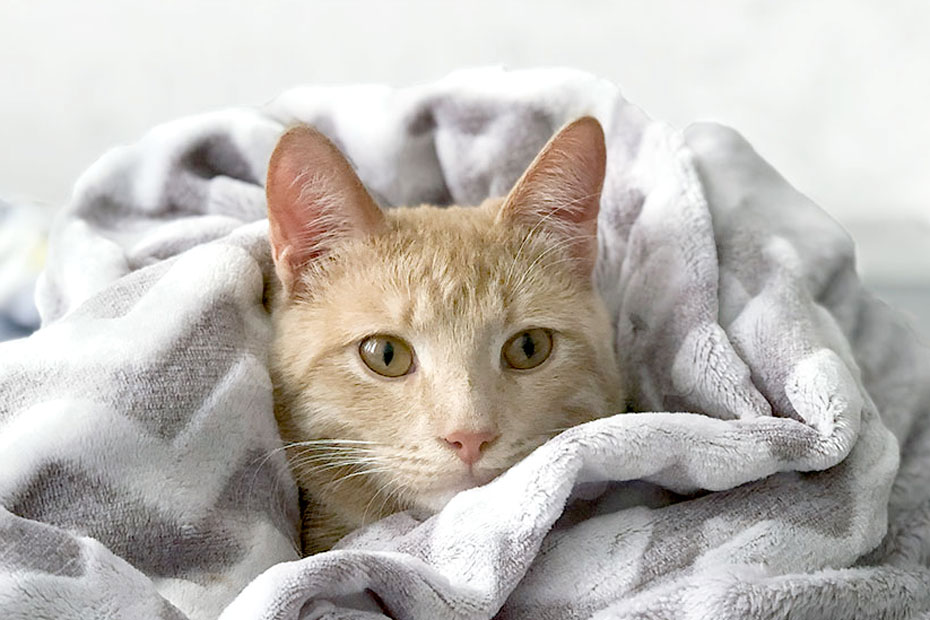 orange kitty in blanket