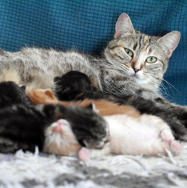 mama cat and babies