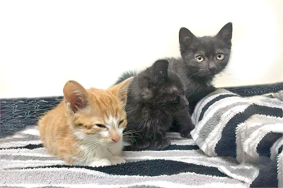 sick kittens from Kijiji