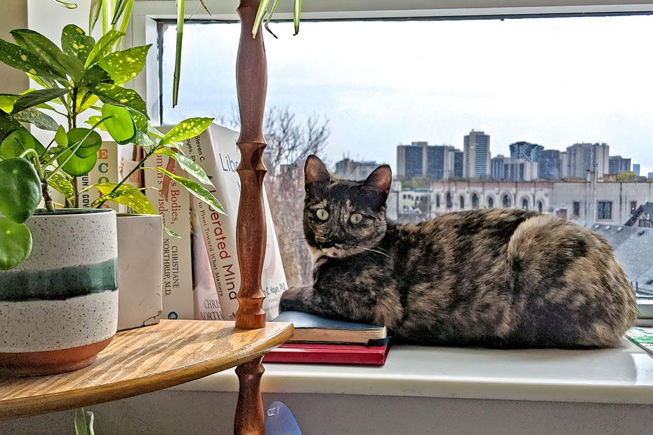 tortie by window