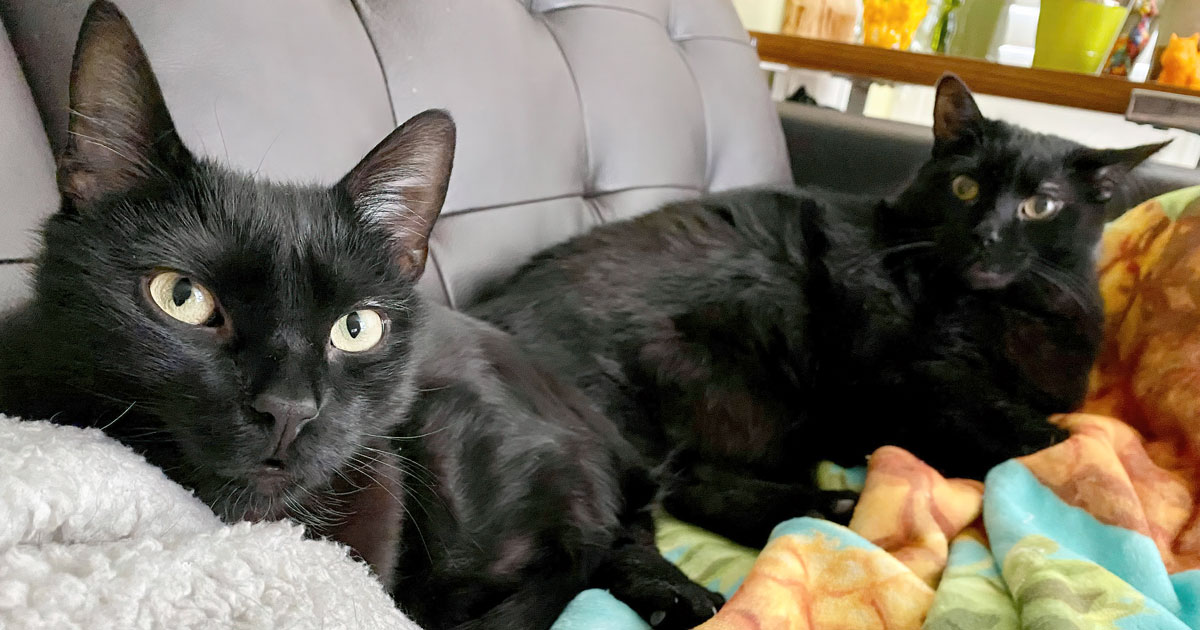 black cats on blankets