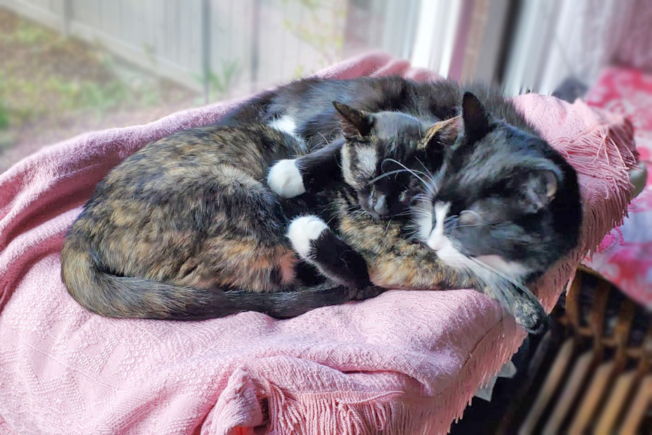 tortie and her cat friend