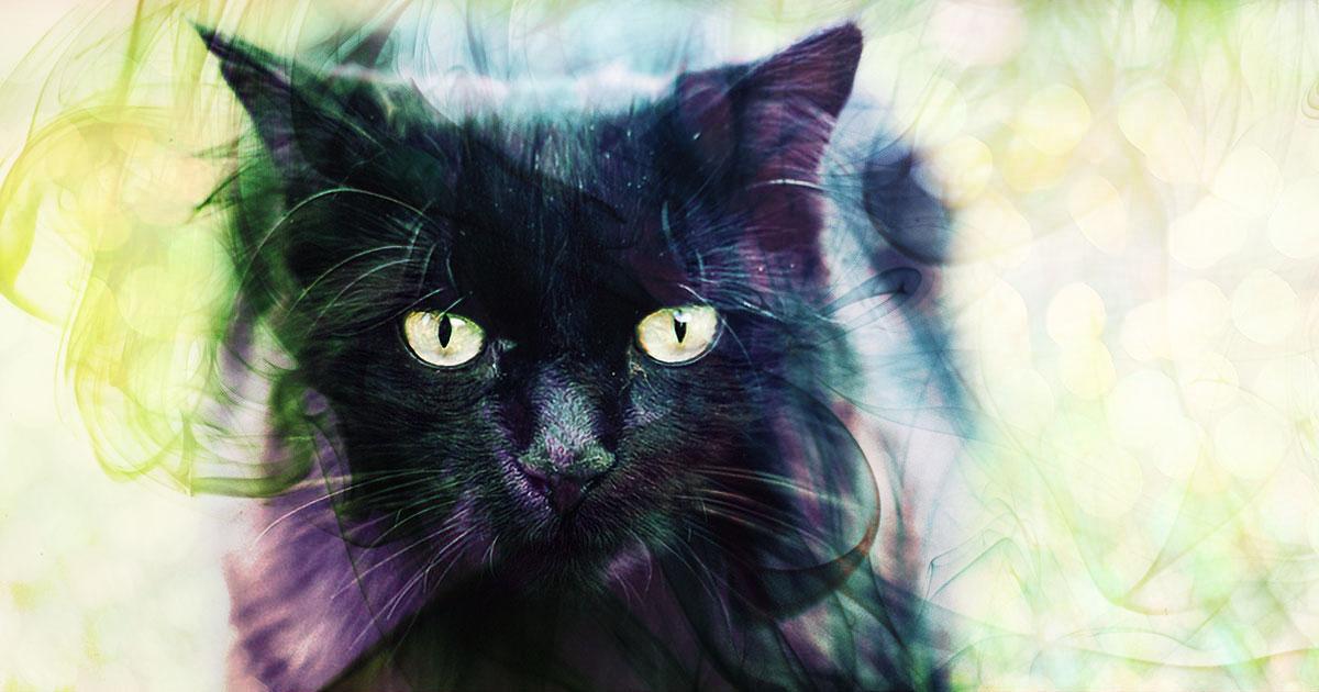 essential oils black cat