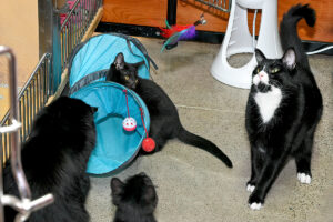 black cats playing